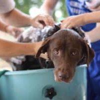 dog-bath2